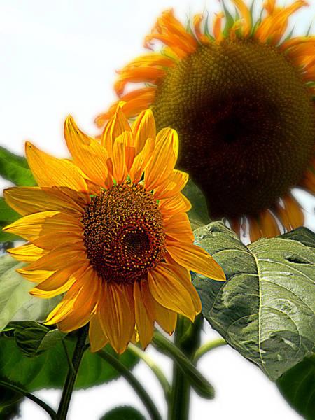 Photograph - Sun Kissed by Micki Findlay