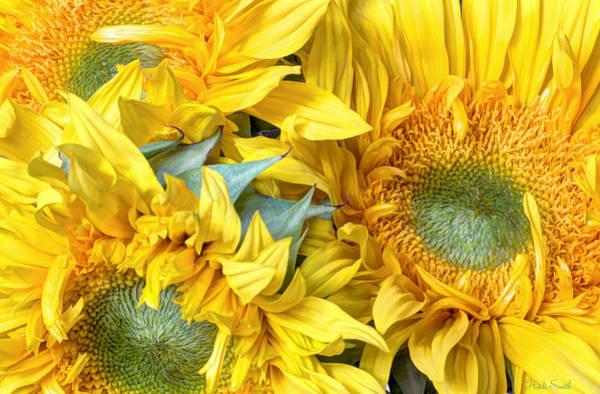 Sunflower Seeds Photograph - Sun Rays by Heidi Smith
