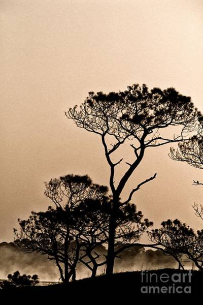 Grayton Beach State Park Photograph - Sun Rise At Red Lake by John Harmon
