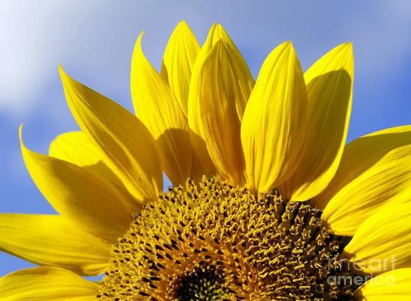 Sunflower Seeds Photograph - Sun Riser by Benanne Stiens