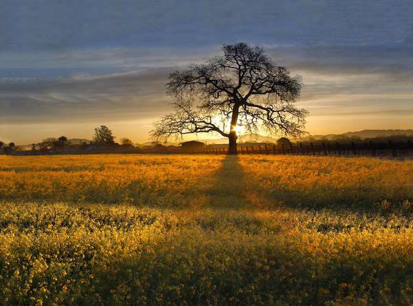 Wild Grape Photograph - Sun Rise Oak In Yellow Mustard by Stan Angel
