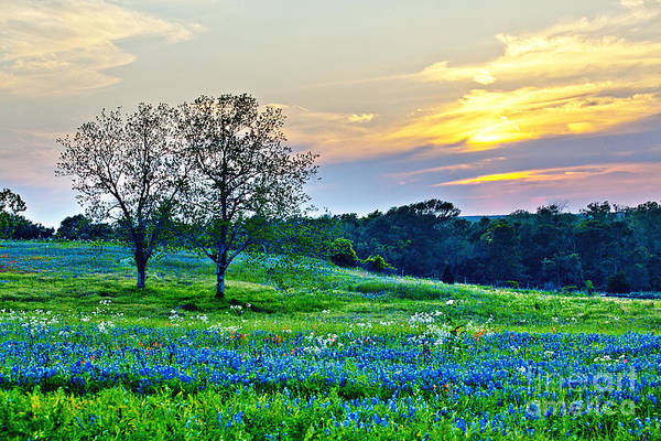 Texas Bluebonnet Photograph - Sun Setting On Another Texas Day by Katya Horner