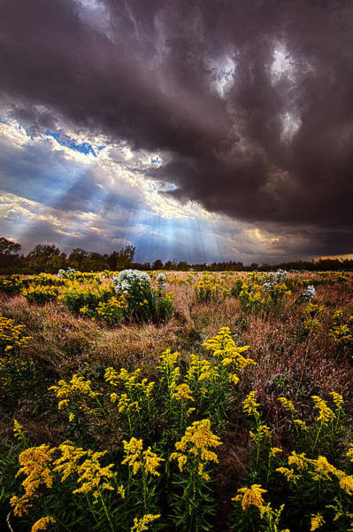 Fall Flowers Photograph - Sun Showers by Phil Koch