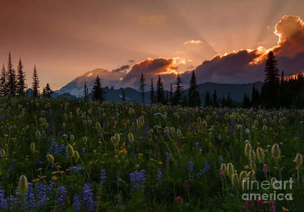 Mt. Washington Photograph - Sunbeam Garden by Mike  Dawson