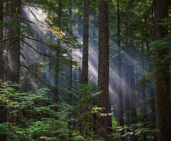 Vogel Photograph - Sunbeams In The Forest by Angie Vogel