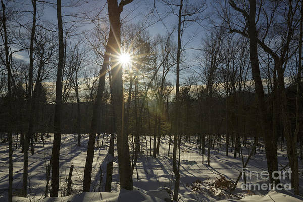 Photograph - Sunburst - White Mountain National Forest New Hampshire by Erin Paul Donovan