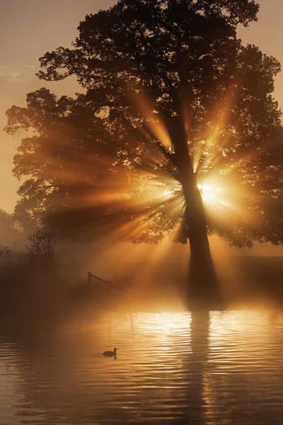 Photograph - Sunburst by Kevinsday