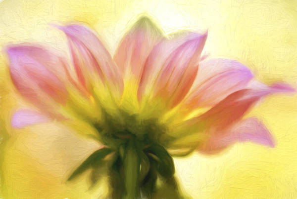 Photograph - Sunburst Painted by Mary Jo Allen