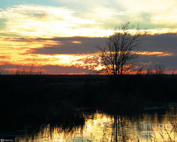 Photograph - Sundown Lacassine Nwr by Lizi Beard-Ward