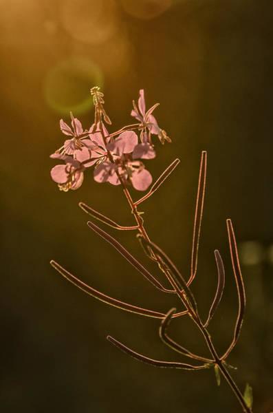 Backlit Photograph - Sundown by Susan Capuano