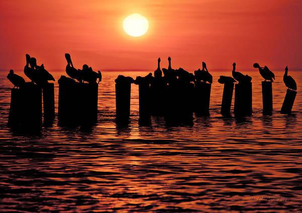 Sundown With Pelicans Art Print