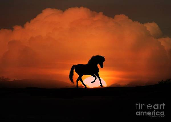Prancing Horse Photograph - Sunfire by Stephanie Laird