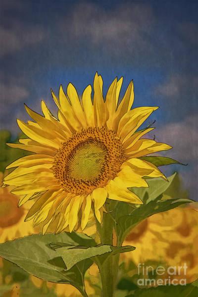 Digital Art - Sunflower 1 by Mauro Celotti