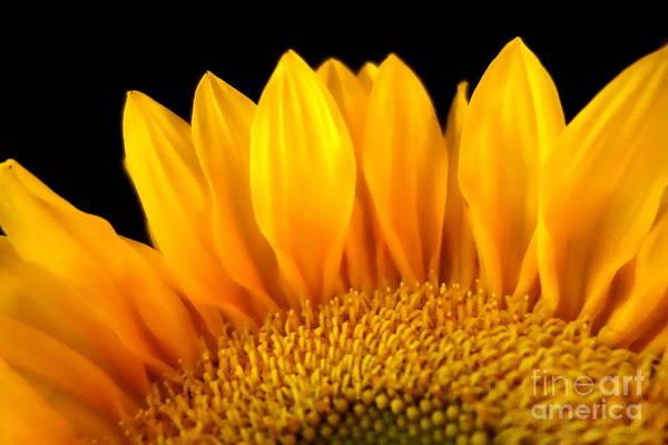 Photograph - Sunflower 4 by Jacqueline Athmann