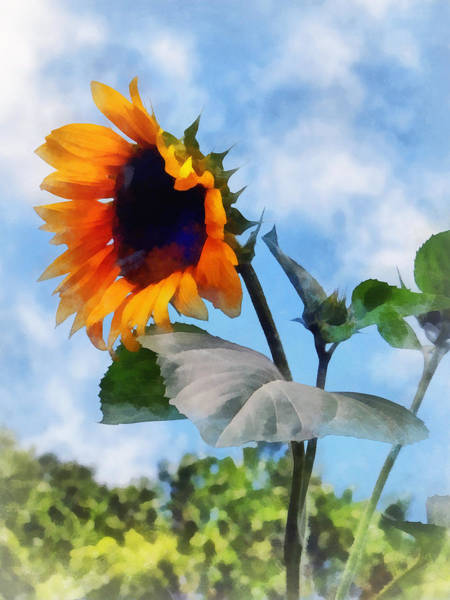 Photograph - Sunflower Against The Sky by Susan Savad
