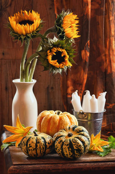 Gourd Photograph - Sunflower And Gourds Still Life by Amanda Elwell