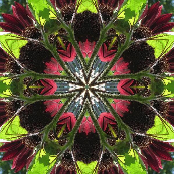 Digital Art - Sunflower And Green Leaf by Trina Stephenson