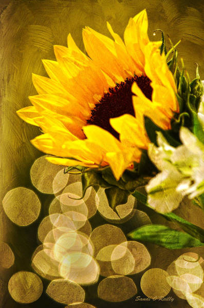 Sunflower Seeds Photograph - Sunflower And The Lights by Sandi OReilly