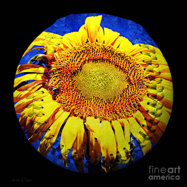 Digital Art - Sunflower Baseball Square by Andee Design