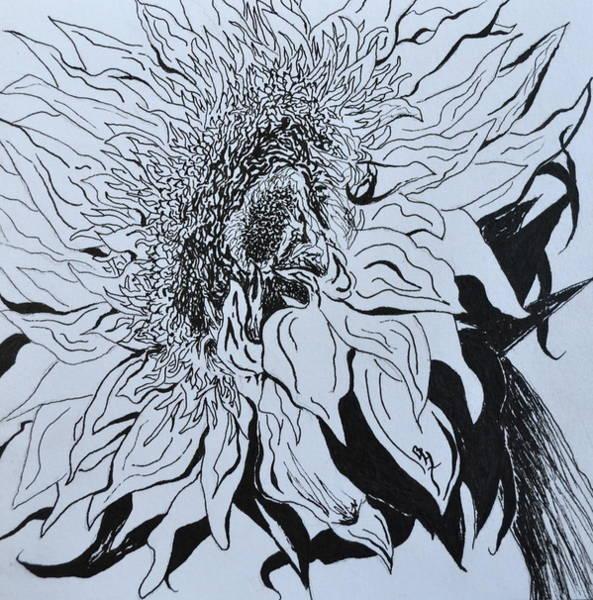 Sunflower Seeds Drawing - Sunflower by Beverley Harper Tinsley
