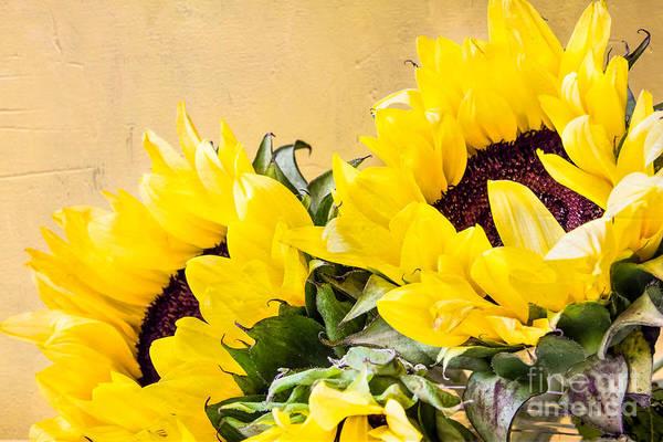 Photograph - Sunflower Bouquet 2 by Susan Cole Kelly