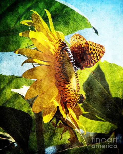 Photograph - Sunflower Butterfly And Bee by Andee Design
