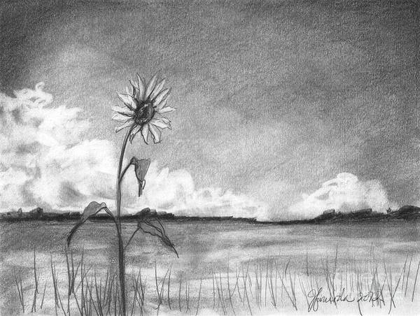 Grass Field Drawing - Sunflower Cloud by J Ferwerda