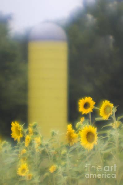 Wall Art - Photograph - Sunflower Country - D009089 by Daniel Dempster