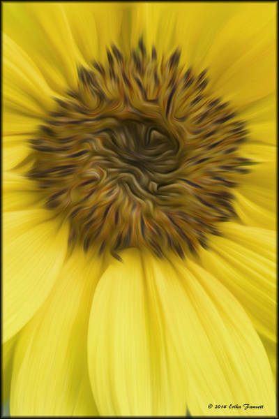 Photograph - Sunflower by Erika Fawcett
