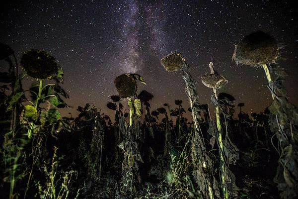 Wall Art - Photograph - Sunflower Field At Night by Aaron J Groen
