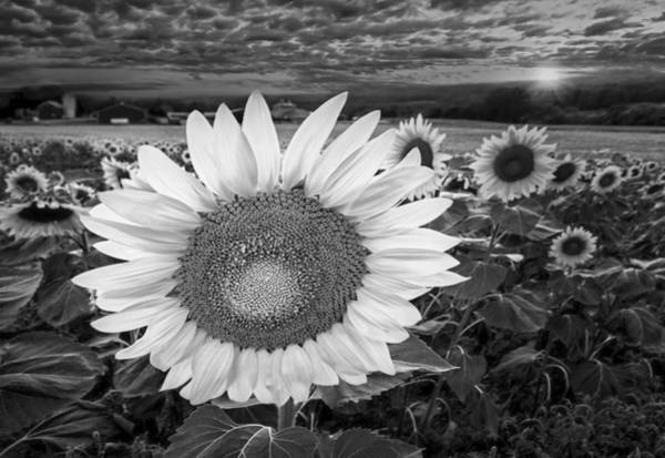 Photograph - Sunflower Field Forever Bw by Susan Candelario