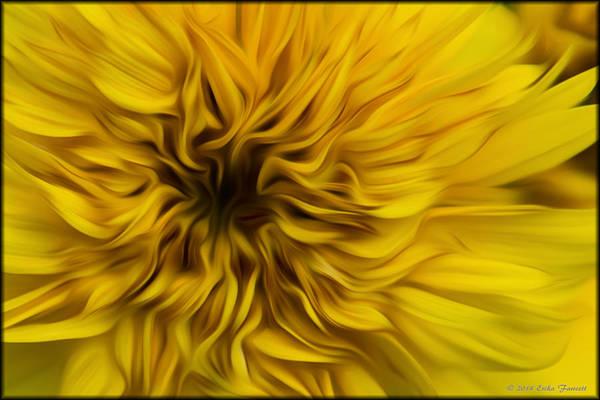 Photograph - Sunflower In Oil by Erika Fawcett