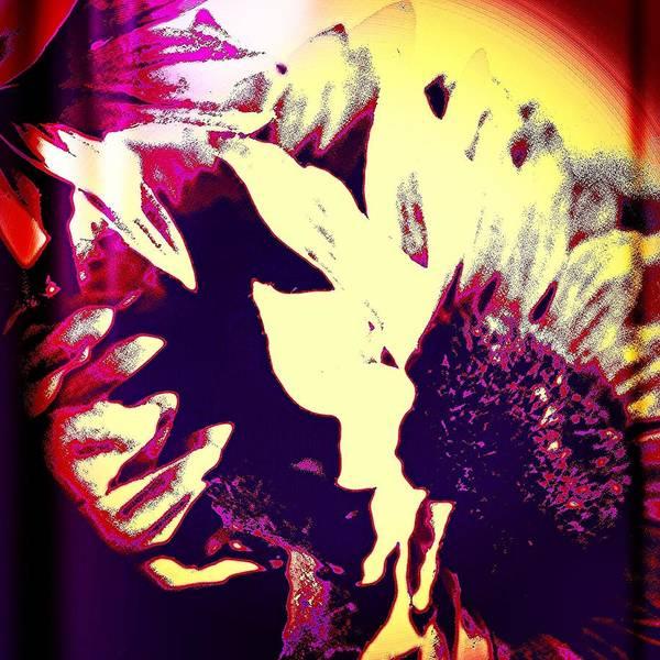Blossom Photograph - Sunflower by Jason Michael Roust