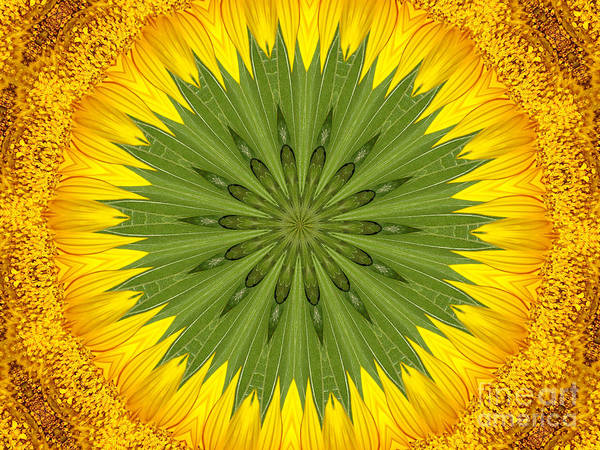 Photograph - Sunflower Kaleidoscope 3 by Rose Santuci-Sofranko