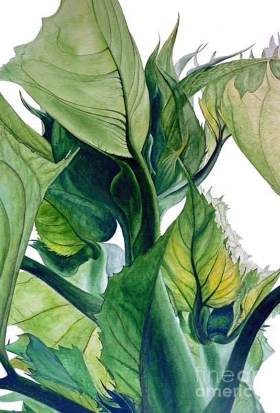 Marie Painting - Sunflower Leaves by Marie Burke