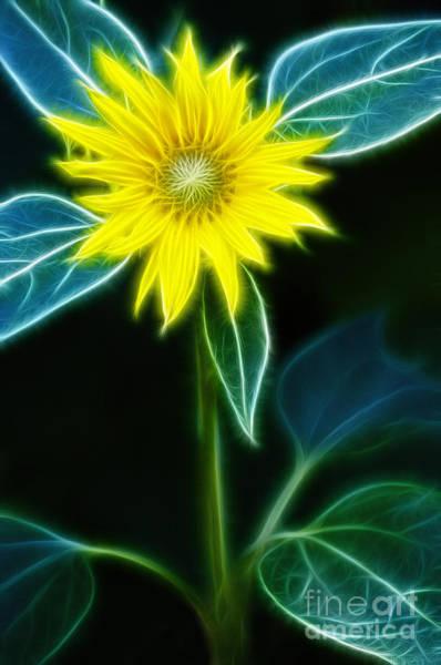 Wall Art - Digital Art - Sunflower by Michal Boubin
