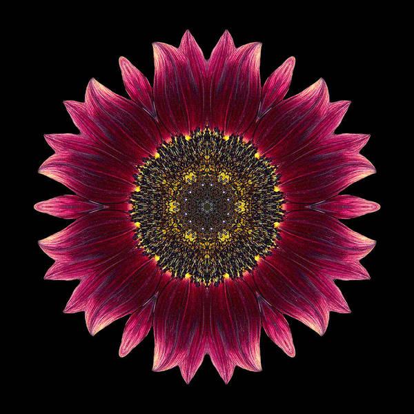 Photograph - Sunflower Moulin Rouge I Flower Mandala by David J Bookbinder