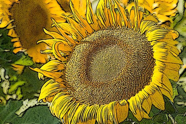Photograph - Sunflower Near Pierre South Dakota by Rob Huntley