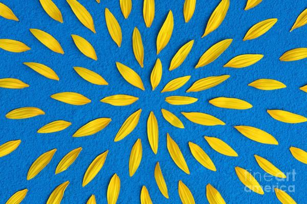 Sunflower Photograph - Sunflower Petals Pattern by Tim Gainey