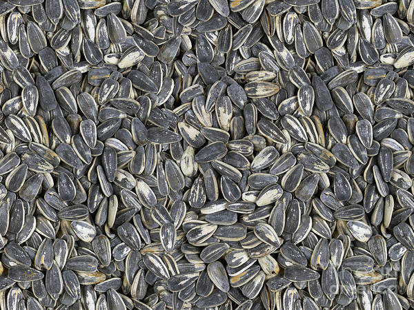 Vegetarian Digital Art - Sunflower Seeds by Peter Awax