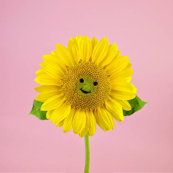 Smiling Photograph - Sunflower Smiley Face by Juj Winn