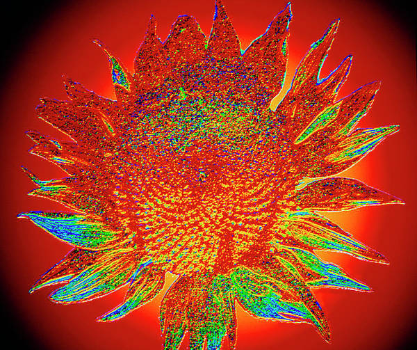 Souled Wall Art - Photograph - Sunflower Souled Fractal by Gregory Sams/science Photo Library