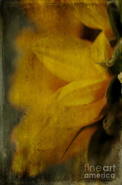 Wall Art - Photograph - Sunflower Study II by Terry Rowe