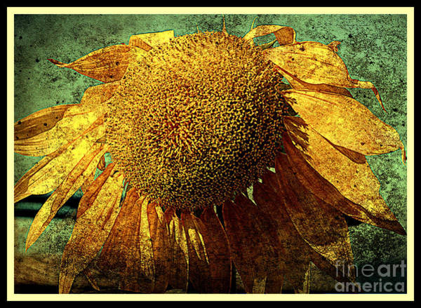 Photograph - Sunflower by Susanne Van Hulst