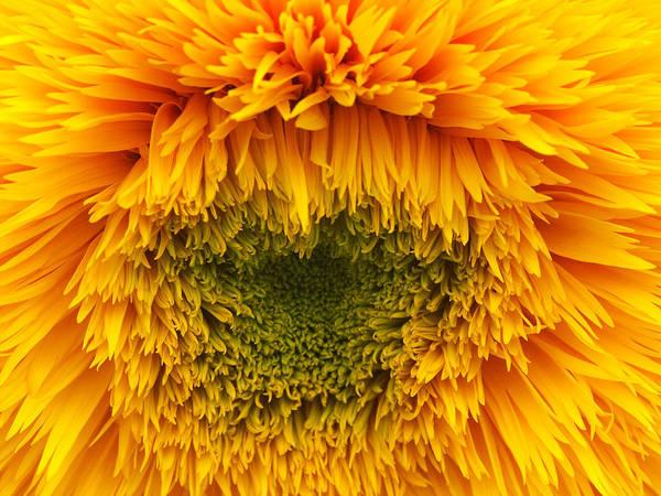 Wall Art - Photograph - Sunflower Teddy Bear by Bonnie Sue Rauch