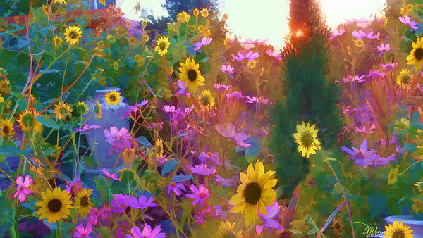 Sunflowers And Cosmos Art Print