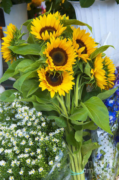 Photograph - Sunflowers And Daisies by Brenda Kean