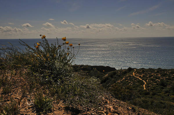 Photograph - Sunflowers At Torrey Pines by Lee Kirchhevel