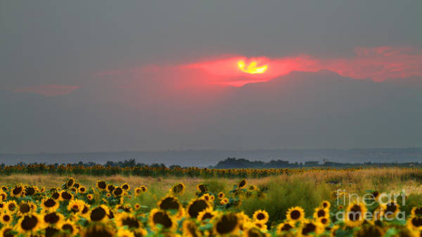 Photograph - Sunflowers In Mordor by Jim Garrison