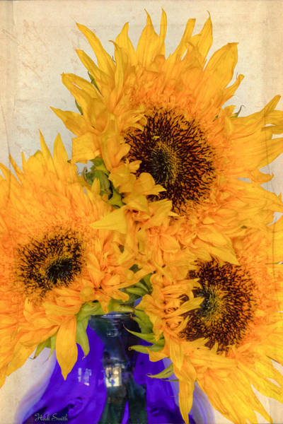 Sunflower Seeds Photograph - Sunflowers Inspired By Van Gogh by Heidi Smith